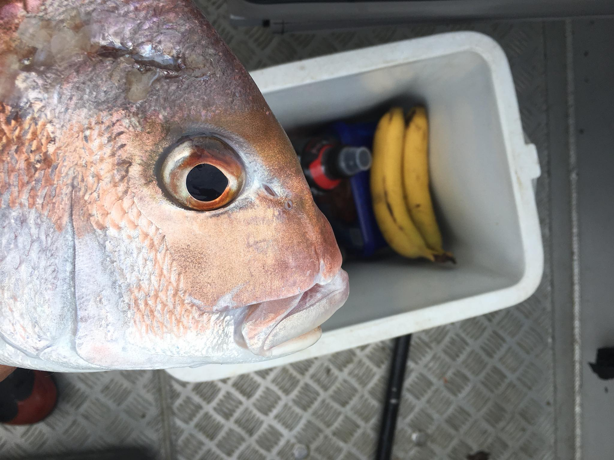 Snapper and Bananas on the Boat - 31 October2017